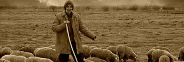 herd-sheep-plain-shepherd-the-flock-camacho-nomadic-547906